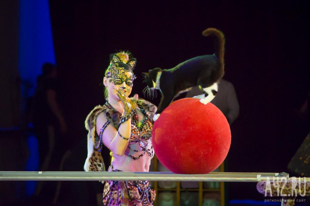 как устроиться работать билетным кассиром в цирк