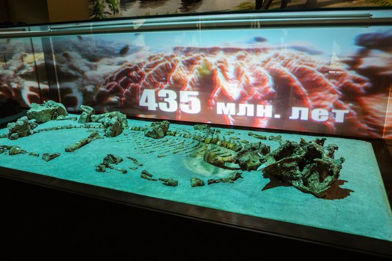 Экспозиция «Кузбасс — уникальный памятник природы»