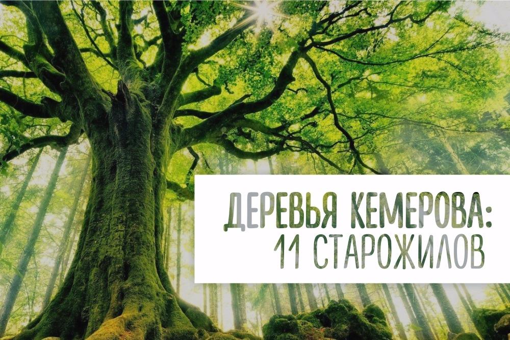 Деревья Кемерова: 11 старожилов || Какие дубы растут в сибири