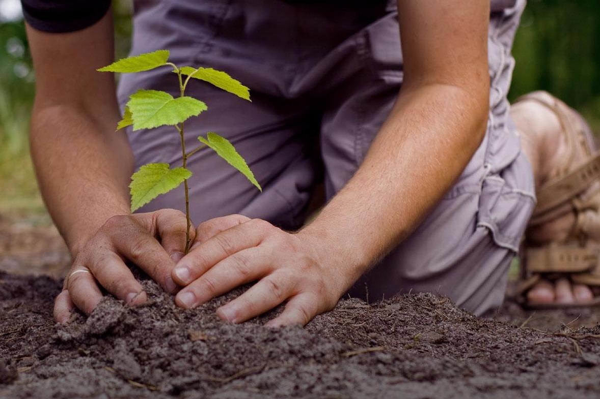 Что означает сажать растения во сне 14